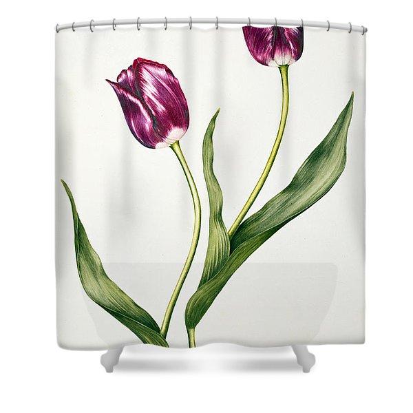 Tulip Negrita Shower Curtain
