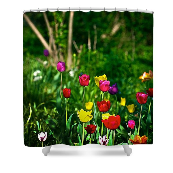 Tulip Rainbow Shower Curtain