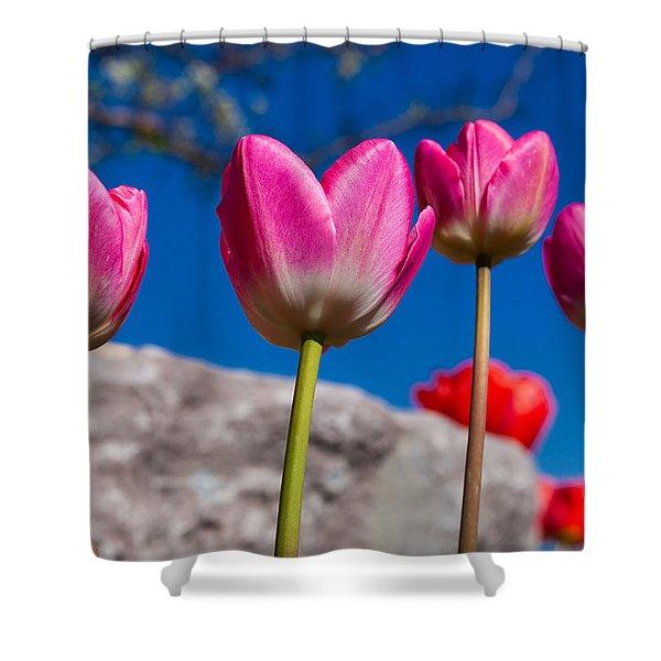 Tulip Revival Shower Curtain