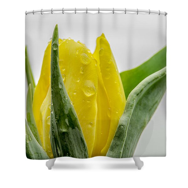 Tulip The Flower Shower Curtain
