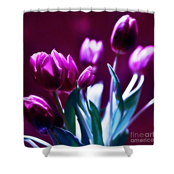Shower Curtain featuring the photograph Purple Tulips by Silva Wischeropp