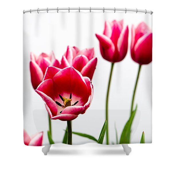Tulips Say Hello Shower Curtain