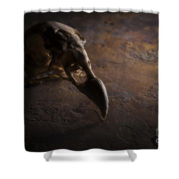 Turkey Vulture Skull On Slate Shower Curtain
