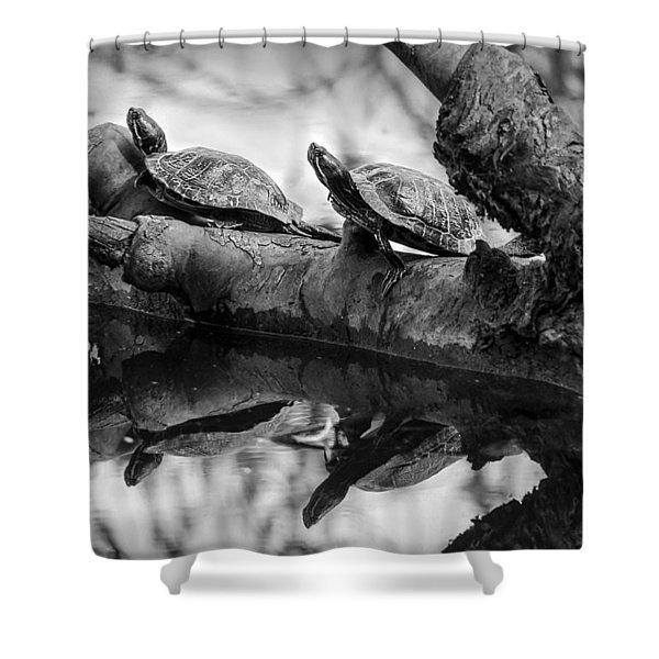 Turtle Bffs Bw By Denise Dube Shower Curtain