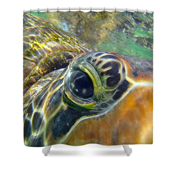 Turtle Eye Shower Curtain