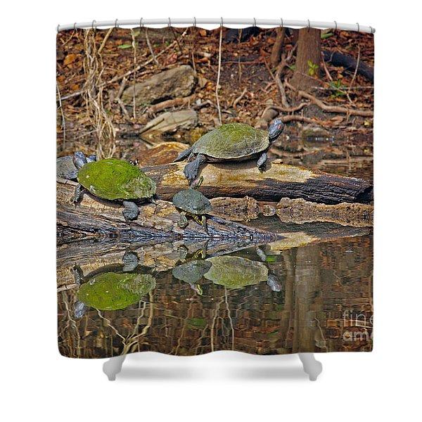 Turtle Trio Shower Curtain