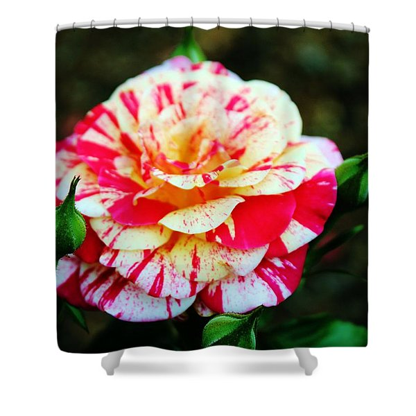 Two Colored Rose Shower Curtain