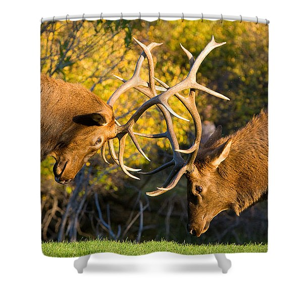 Two Elk Bulls Sparring Shower Curtain