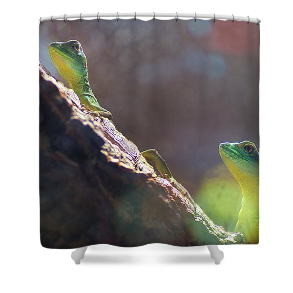 Two In One Shower Curtain