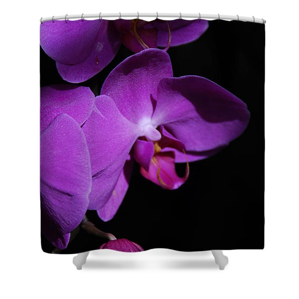 Two Orchids And A Bud Shower Curtain