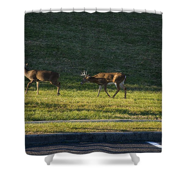 Two White Tailed Deer Fighting And A Third Is About To Engage Shower Curtain