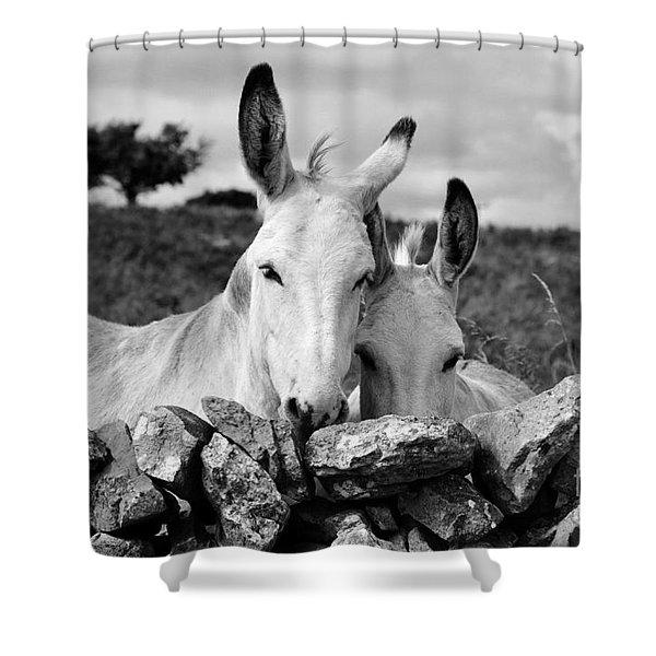Two White Irish Donkeys Shower Curtain