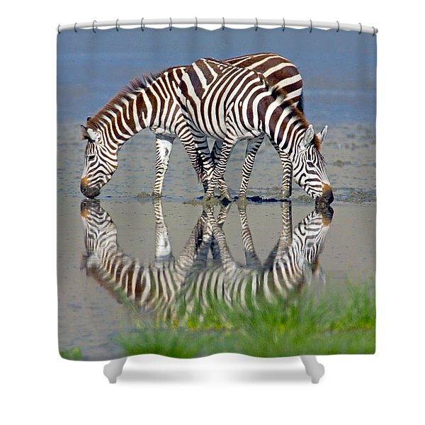 Two Zebras Drinking Water From A Lake Shower Curtain