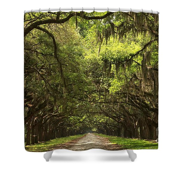 Under The Ancient Oaks Shower Curtain