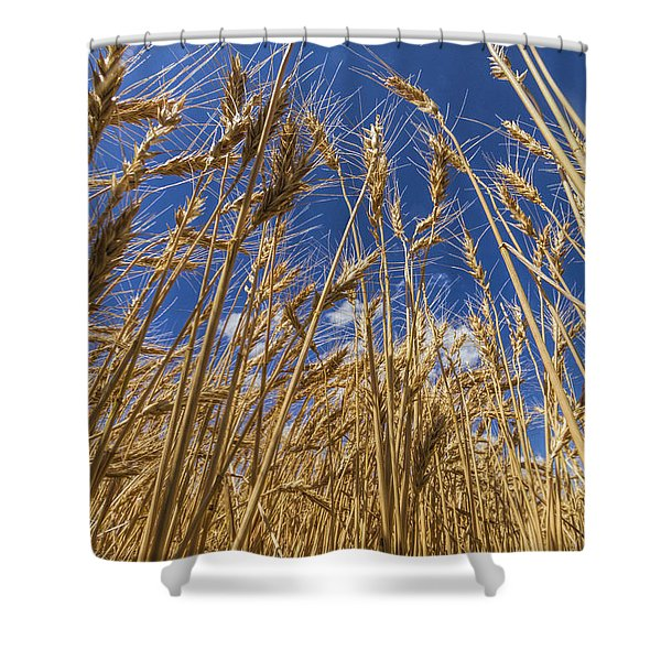Under The Wheat Shower Curtain