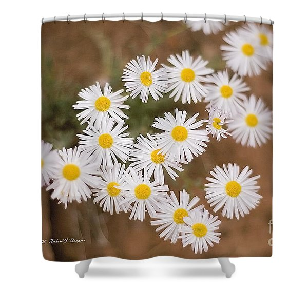 Unidentified Daisy Shower Curtain