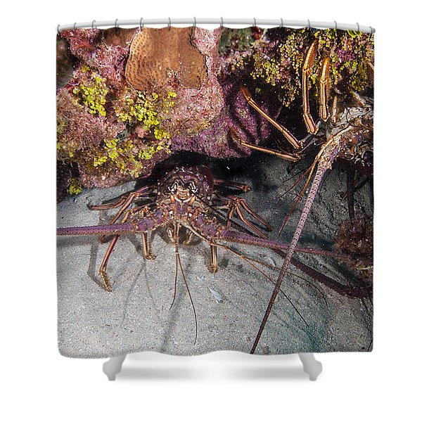 Up And Down Lobster Shower Curtain