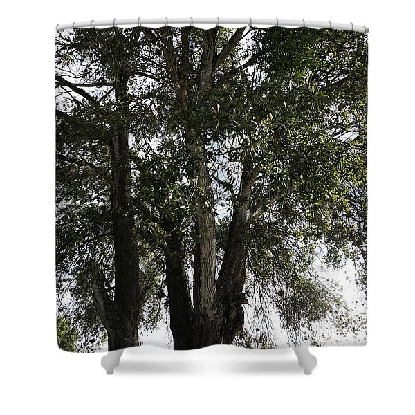 Up-view Of Oak Tree Shower Curtain