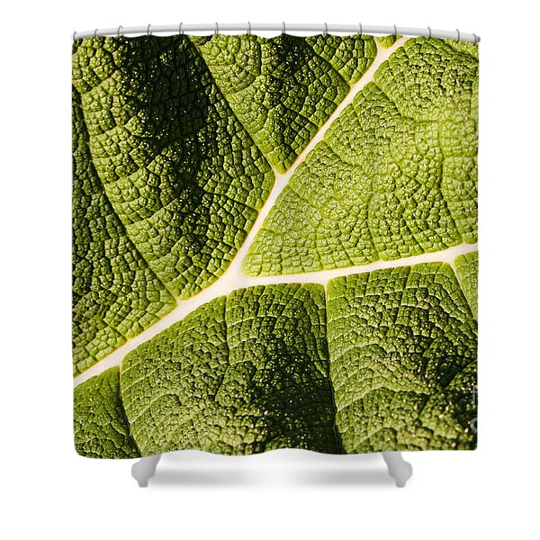 Shower Curtain featuring the photograph Veins Of A Leaf by John Wadleigh
