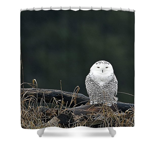 Vermont Snowy Owl Shower Curtain