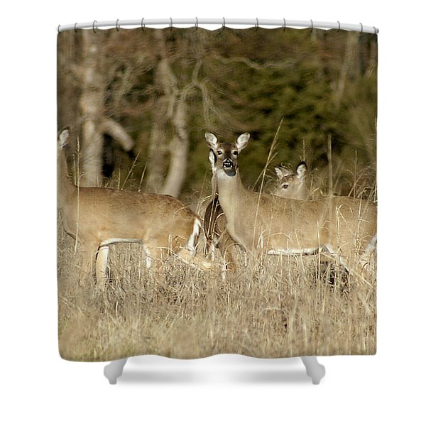 Vigilant White-tailed Deer Shower Curtain