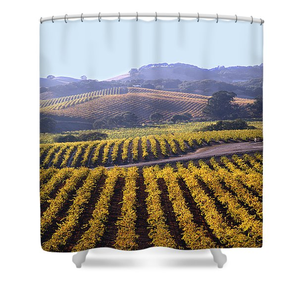 6b6386-vineyard In Autumn Shower Curtain