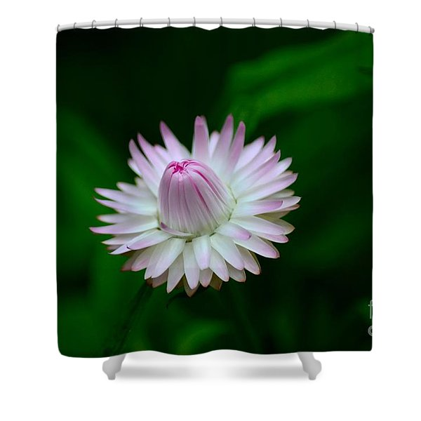 Violet And White Flower Sepals And Bud Shower Curtain