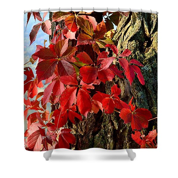 Virginia Creeper Shower Curtain
