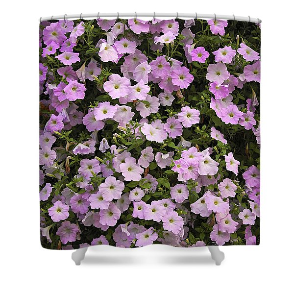 Wall Of Petunias Shower Curtain