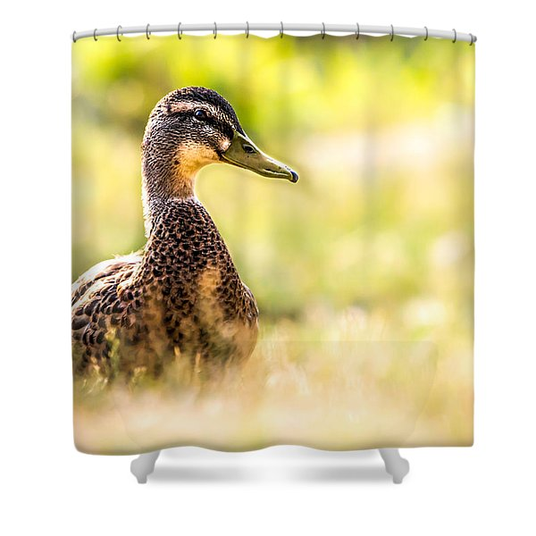 Warm Summer Morning And A Duck Shower Curtain