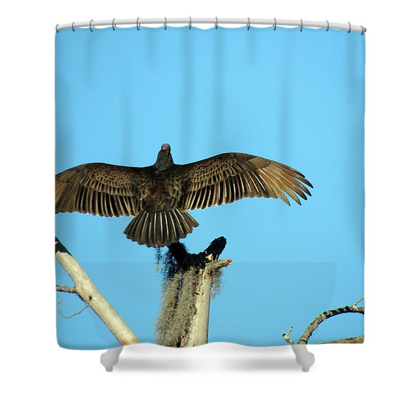 Warming Up Shower Curtain