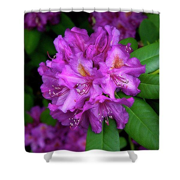 Washington Coastal Rhododendron Shower Curtain