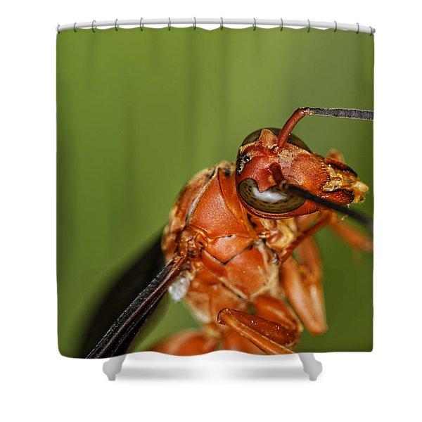 Wasp 1 Shower Curtain