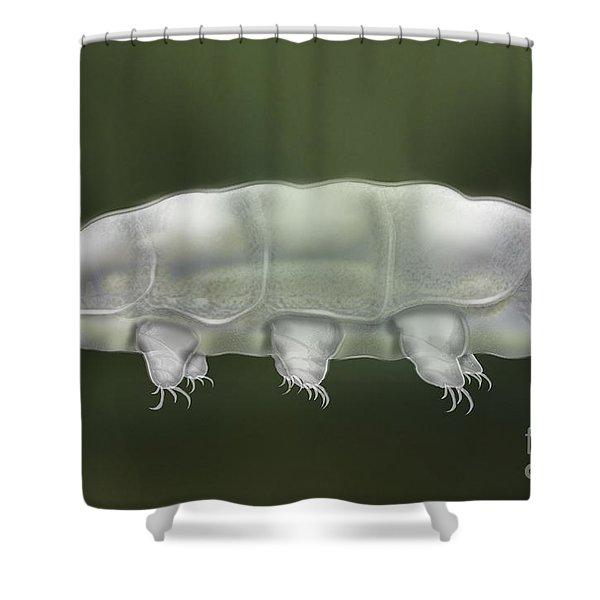Water Bear Tardigrada - Waterbear Tardigrade  - Scientific Illustration Shower Curtain