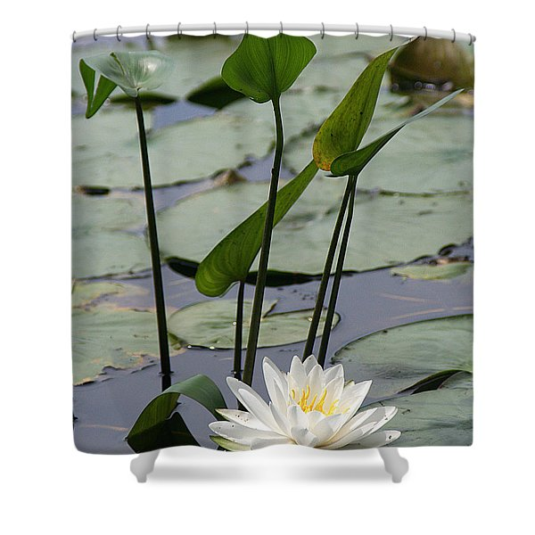 Water Lily In Bloom Shower Curtain