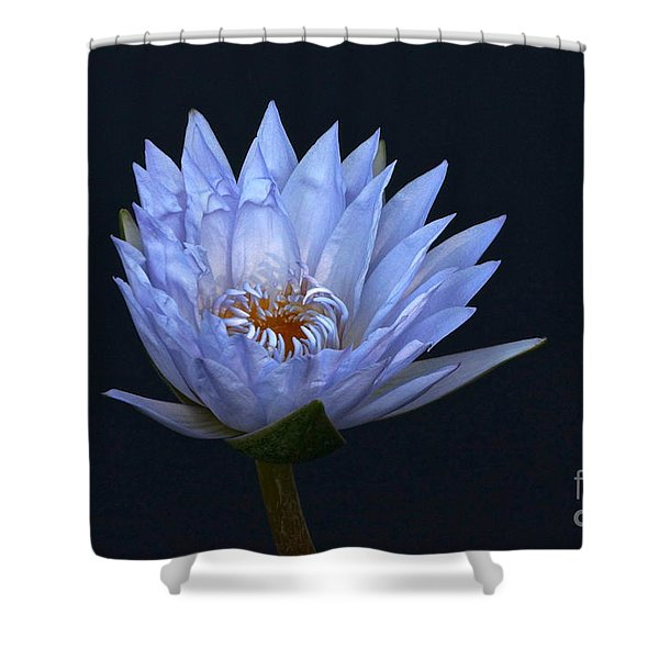 Water Lily Shades Of Blue And Lavender Shower Curtain