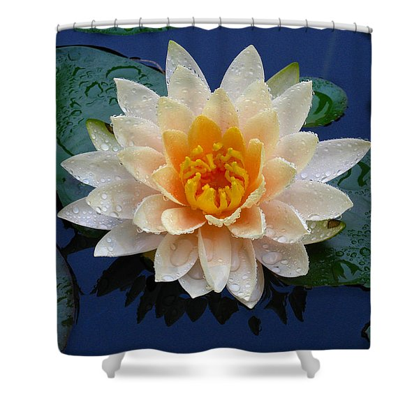 Waterlily After A Shower Shower Curtain