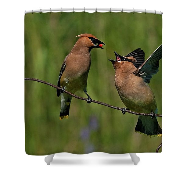 Waxwing Love.. Shower Curtain