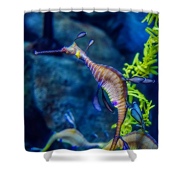 Shower Curtain featuring the photograph Weedy Seadragon by Alex Grichenko