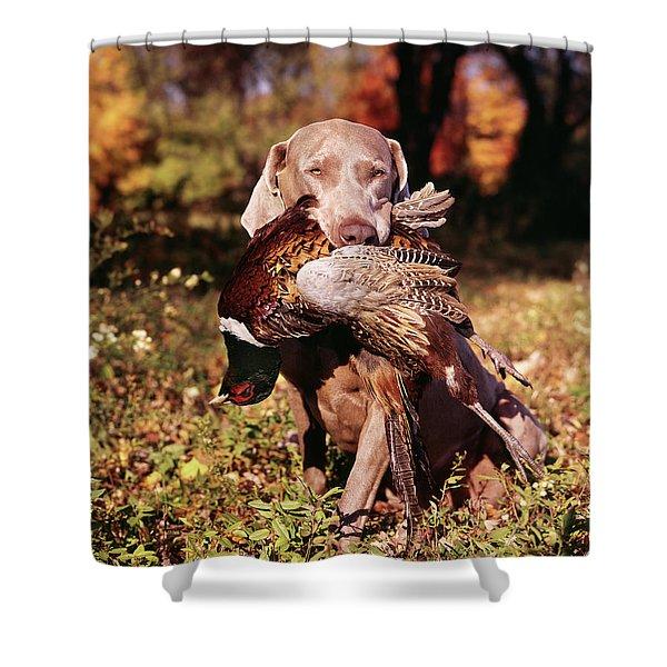 Weimaraner Hunting Dog Retrieving Ring Shower Curtain