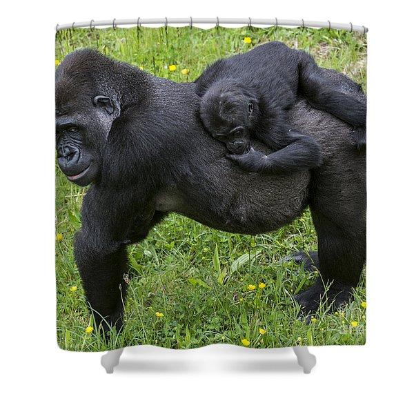 Western Lowland Gorilla 2 Shower Curtain