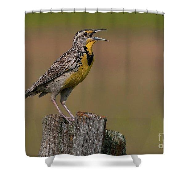 Western Meadowlark.. Shower Curtain