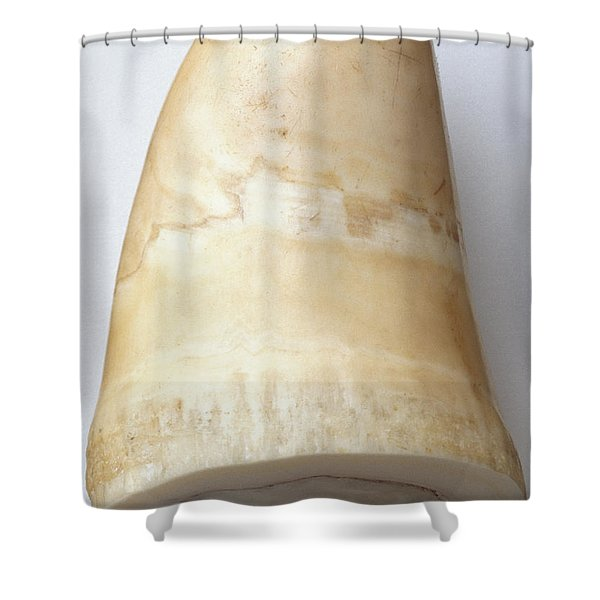 Whale Tooth Shower Curtain