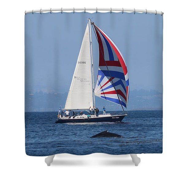 Whale Watching 2  Shower Curtain