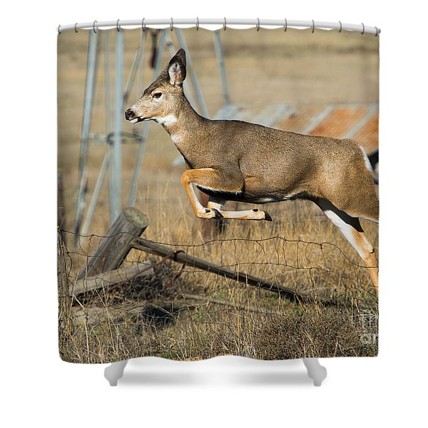 What Fence Shower Curtain