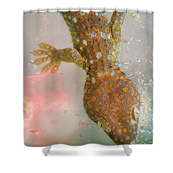 What If Tom Cruise Was A Gecko Shower Curtain