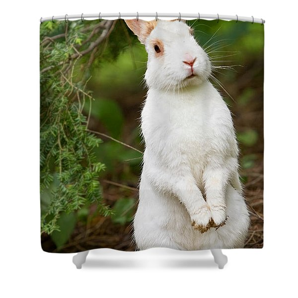 What's Up Doc Shower Curtain