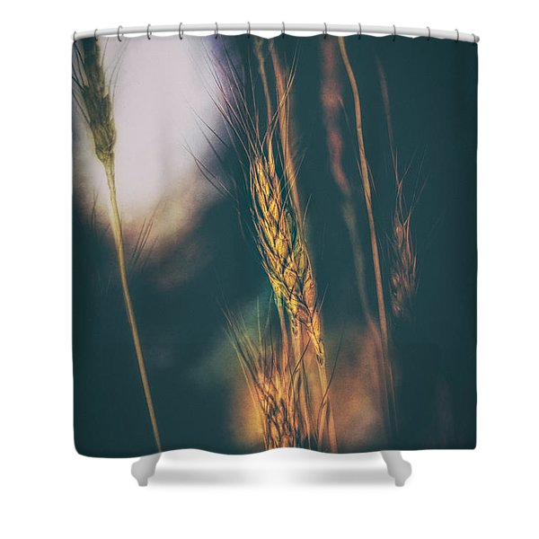 Wheat Of The Evening Shower Curtain