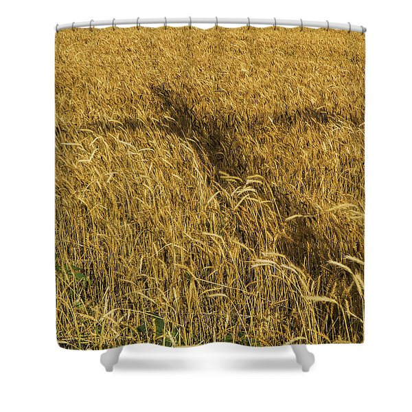 Wheat With Cross  Shower Curtain