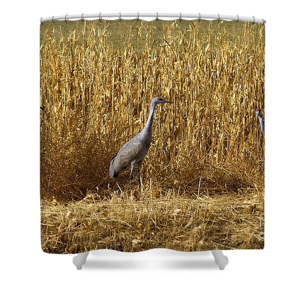 Where Is The Corn Shower Curtain
